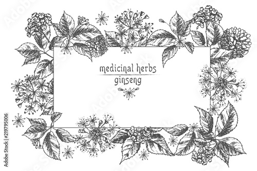 Realistic botanical ink sketch of ginseng root flowers and berries realistic botanical ink sketch of ginseng root flowers and berries isolated on white floral mightylinksfo