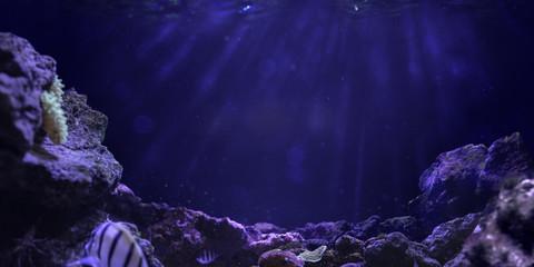Wall Mural - Underwater ocean background deep blue sea