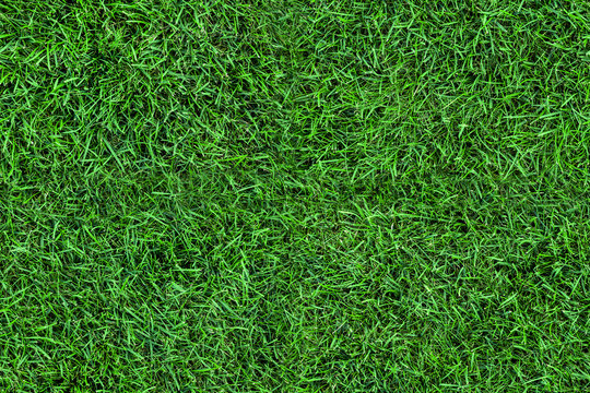 Dark seamless green grass texture background. Fresh lawn field view frim above