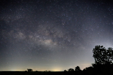 Milky Way and silhouette tree view.