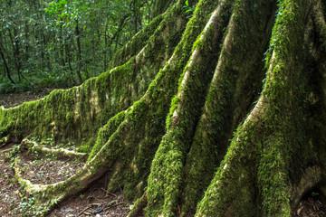 Detail of Atlantic Forest vegetation