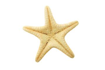 Starfish backside isolated on white