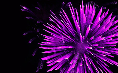 Purple Firework Burst on Black. Toned image.