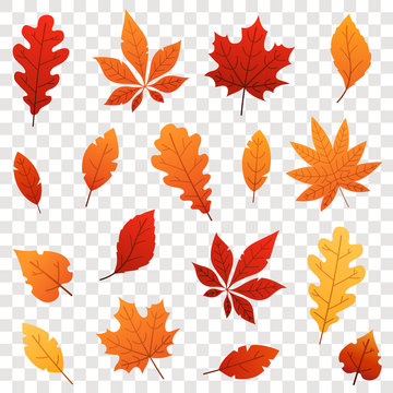 Colorful Autumn falling leaves isolated on transparent background. Vector illustration.