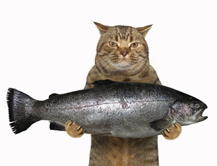 The cat is holding a big trout. White background.