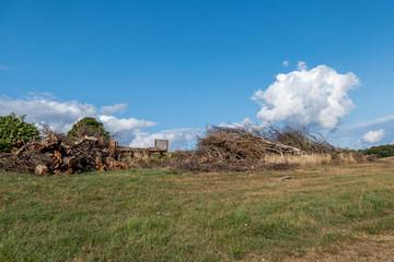 Brennholz durch Baumschnitt