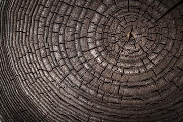 Wood old ash texture of cut tree trunk, close-up. Macro shot. Ash tree.