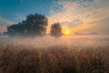 Beautiful misty sunrise landscape. Fog, glowing in sun rays, over autumn dry grass meadow, through the oak-trees on background.