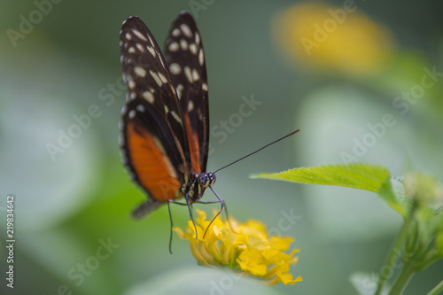Papillon Blanc Orange Et Noir Butine Une Fleur Jaune Stock Photo