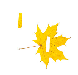 Autumn alphabet. Letter I is cut from  yellow maple leaf