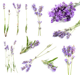 Tuinposter Lavendel Set with aromatic fresh lavender on white background