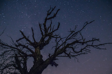 sylwetka drzewa na tle gwiaździstego nieba