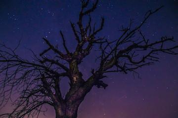 samotne drzewo nocą i niebo z gwiazdami