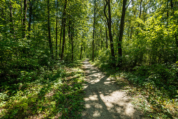 summer road through deciduous green forest