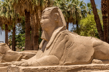 Photo sur Plexiglas Commemoratif Sphinx statue at the avenue of sphinxes in the Temple of Luxor Egypt
