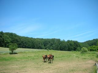 Pferdekoppel mit Pferden im Odenwald (Idyll 12)