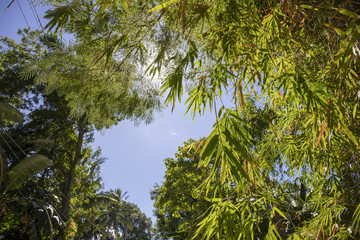 Green bamboo leaf on blue sky background. Beautiful tropical landscape photo. Exotic place for vacation.