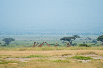 Wild Animals in Kenya, Africa