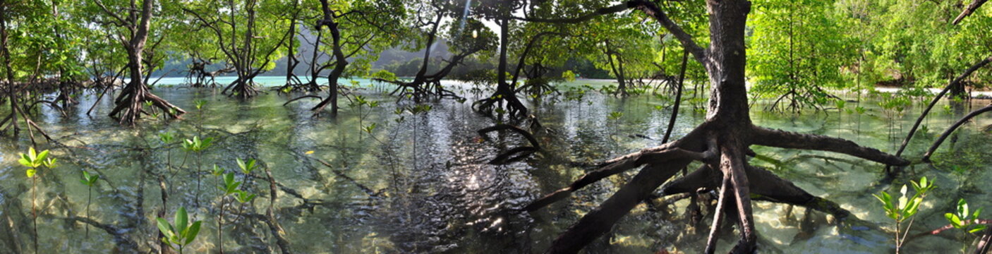 Panorama of a tropical mangrove forest on Mu Ko Surin islands in Thailand