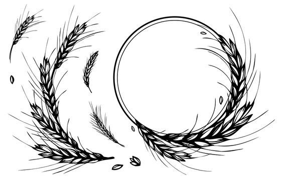 Rye, barley or wheat round frame or wreath on white background. Black and white hand drawn design for cooking, bakery, tags or labels. JPG include isolated path