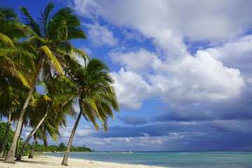 Some Palm trees at a beach in the south of Cuba: