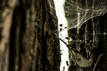 spider, tree, bark, wood, texture, nature, trunk, forest, brown, plant, old, pine, rough, birch, woods, natural, green, pattern, oak, abstract, surface, macro, white, backgrounds, closeup