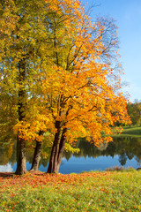 Golden fall (mellow autumn) in Pavlovsky park, Pavlovsk, Saint Petersburg, Russia