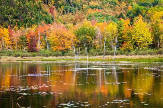 Autumn in Acadia National Park, Mount Desert Island, Maine, USA