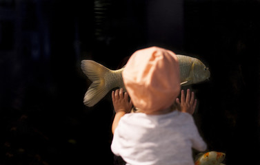 Kleines Kind steht vor Aquarium und schaut auf Fisch. Little child standing in front of fish tank looking on fish.