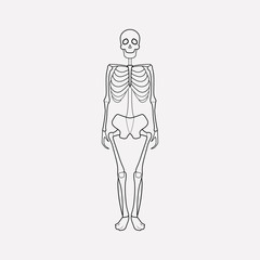 Skeleton icon line element. Vector illustration of skeleton icon line isolated on clean background for your web mobile app logo design.