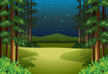 A forest landscape at night