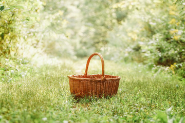 One small cute empty wicker basket in the middle of forest park. Picking autumn fall harvest...