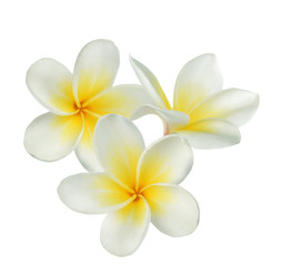 Tuinposter Frangipani Frangipani flower on white background