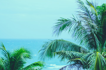 Wall Mural - Coconut palm trees with blue calm sea, summer