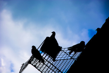 Pigeons on the background of the sky in a cage