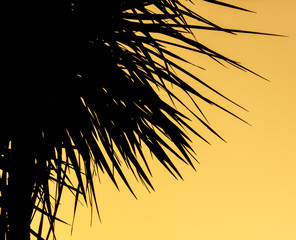 Silhouette of palm trees on sunset background