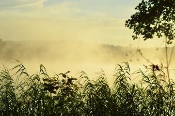 Zamglony wschód słońca w Borach Tucholskich
