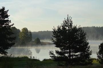 Zamglony poranek w Borach Tucholskich