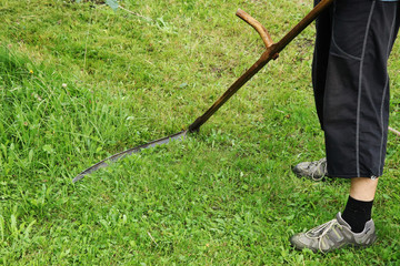 A man mowing a grass with scythe. This tool is assemble from wood stick and steel edge