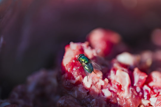 fly on meat