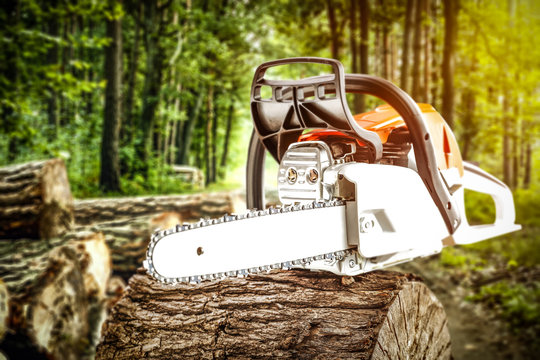 Autumn forest and chainsaw