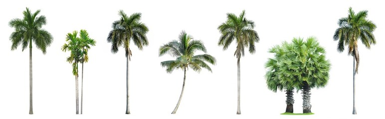Foto op Textielframe Palm boom Collection of Palm trees isolated on white background