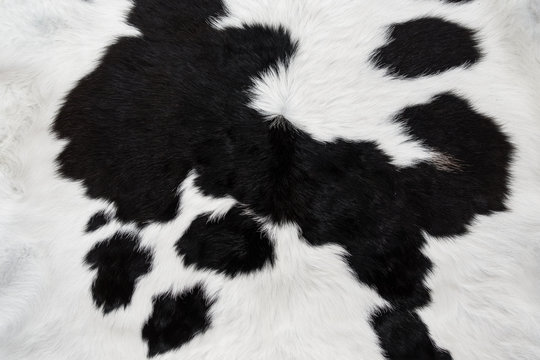 cow skin fur close up background