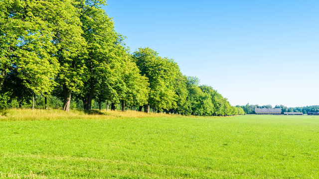 Summer farmland with a row of trees beside a green field. Farm visible in the distance. Location Beateberg, Sweden.
