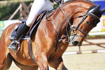 Reitsport, auf dem Parcours reiten Springpferd mit Reiter beim Reitturnier, im Dateil