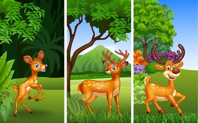 Set of three deer animals with nature background