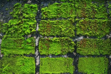 Wall Mural - Light shining to Moss on the rock