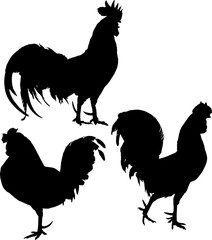group of roosters silhouettes on white