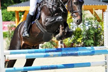 Foto op Aluminium Paardrijden Der Hindernissprung beim Springreitsport, das Springpferd setzt mit einem Steilsprung über die Planken und Gatter, vertrauensvoll und willig