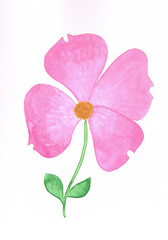 Watercolor pink dogwood handmade with paints and a brush